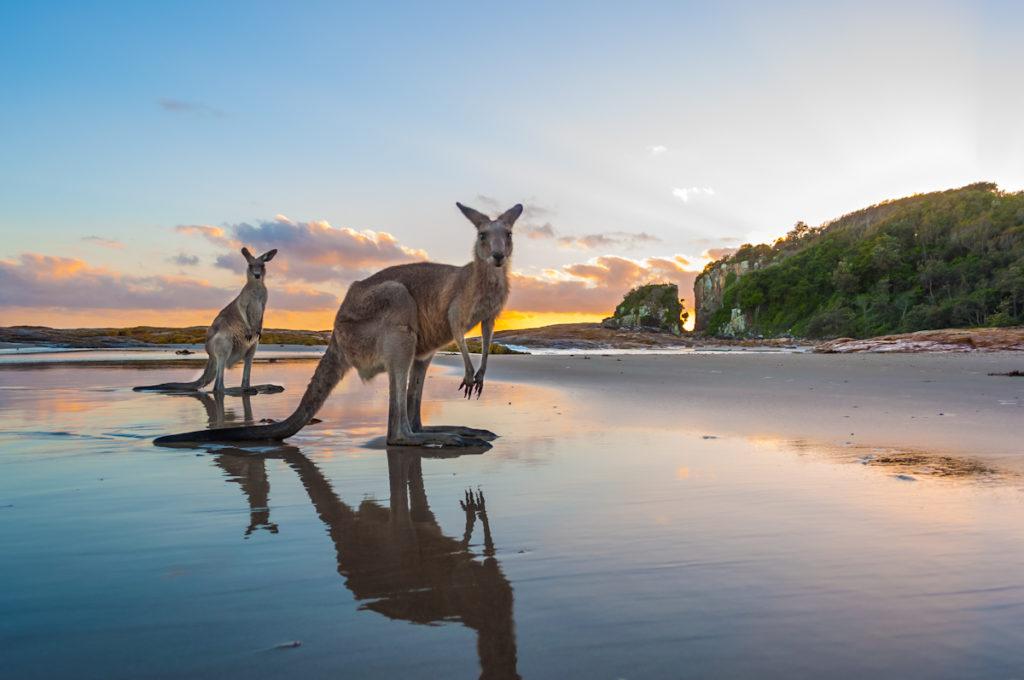 Crowdy-Bay-National-Park-Diamond-Head